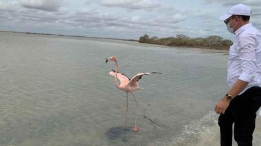 Dos flamencos rosados volvieron a su hábitat en La Guajira