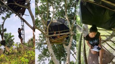 Joven cordobesa recibe clases en un árbol de Ñipi para acceder a internet