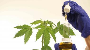 En video | Cannabis, una salida para paliar el dolor crónico en el Caribe