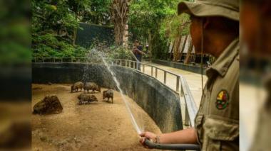 ¿Qué dice el Distrito sobre situación del Zoológico?