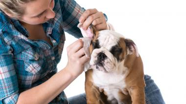 Limpieza de oídos, entre los cuidados básicos de las mascotas