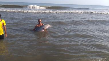 En video | Rescataron un delfín y lo regresaron al mar en Tasajera