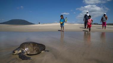 Alertan sobre alarmante declive en biodiversidad de América Latina