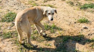 ¿Sabe usted dónde está su perro en este momento?