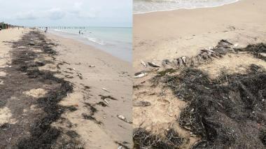 Mortandad de peces en Manaure por malas prácticas pesqueras