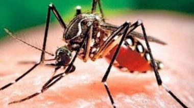 Procuraduría urge tomar acciones inmediatas para frenar contagio por dengue
