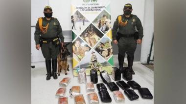 Canino de la Policía Metropolitana olfateó 25 kilos de marihuana