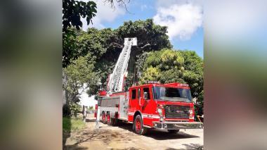 Talan árbol que representaba peligro para la comunidad