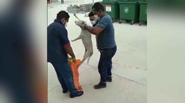 Denuncian maltrato de animales en Malambo