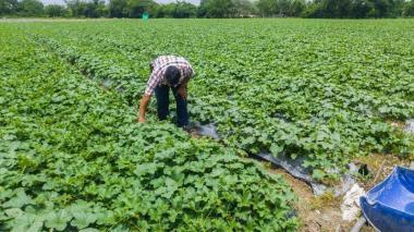 Agricultores colombianos se conectan con visión holística de la agroecología