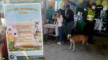 Jornada de bienestar animal en Sabanagrande