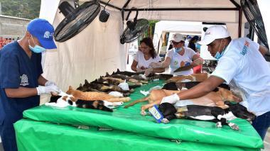 En Santa Marta esterilizarán 2000 perros y gatos en dos meses