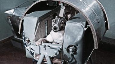 La perra Laika no sobrevivió al viaje