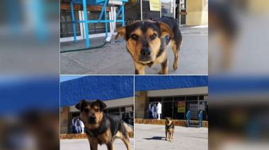 'Covito' el perro que espera a su amo fallecido afuera del hospital