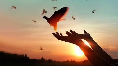 La lucha para continuar con el 'cultivo' de la paz