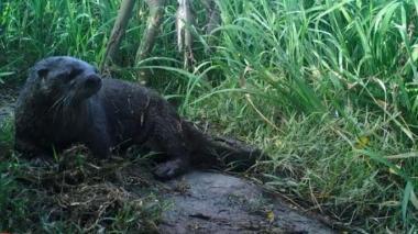 Avistan venados, nutrias y mapaches