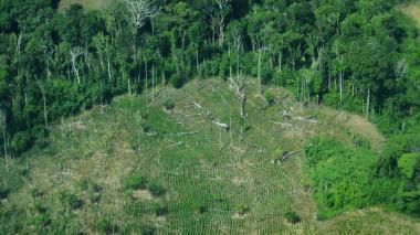 Con documento Conpes, Gobierno busca frenar deforestación de bosques