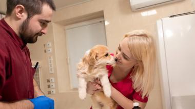 Esterilizar, razones para que a su mascota se le practique este procedimiento