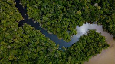 WWF alerta por aumento de incendios en el Pantanal