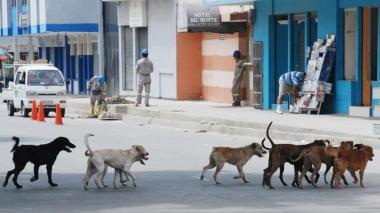 Imputan a hombre que habría envenenado a 11 perros en Sucre