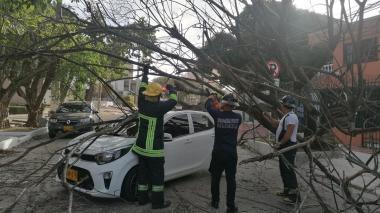 Brisas causan caída de árboles en Barranquilla
