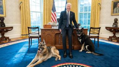 Los perros de Biden se van de la Casa Blanca tras un incidente agresivo