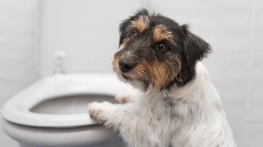 La gastritis también afecta a los animales de compañía