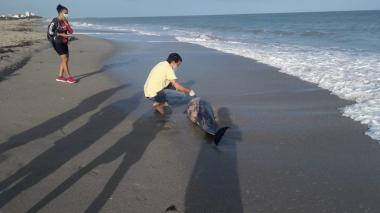 Encuentran un delfín muerto en las playas de Riohacha