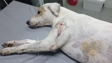 Maltrato animal: hombre baleó a un perro en el norte de Barranquilla