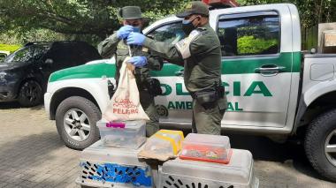 Policía Ambiental rescata 36 serpientes y 5 lagartos