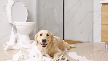 Las mascotas también sufren con el confinamiento