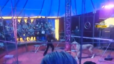 Impresionante ataque de una leona al domador de un circo en plena actuación