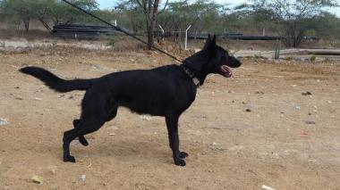 Interaseo denuncia muerte de perro de vigilancia