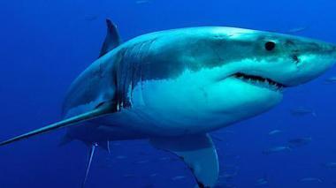 Hace 19 millones de años los tiburones casi desaparecerían de los océanos
