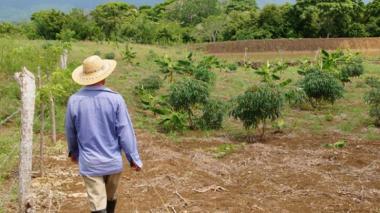 59 mil hectáreas de tierras han sido restituidas en el Caribe