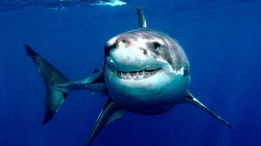 Uno de cada diez arrecifes del mundo ya no tiene tiburones, según estudio