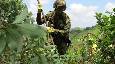 Producción de cocaína en Colombia aumentó un 15%