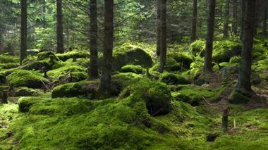 Expiden decreto para manejo sostenible de flora silvestre y no maderables