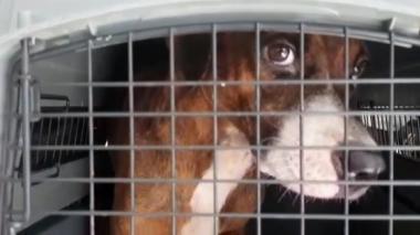 Rescatan dos perros en grave estado de desnutrición en Cartagena