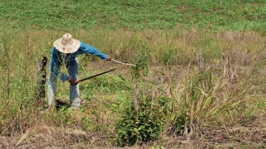 Inversión de $360 millones reactiva producción de campesinos en la Costa