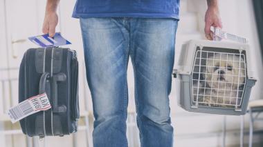 Consejos prácticos para llevar de viaje a su mascota