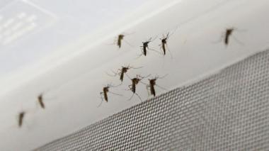 Alcaldía pide tomar medidas para prevenir el dengue