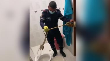 Bomberos rescatan serpiente dentro de un inodoro en Sahagún, Córdoba