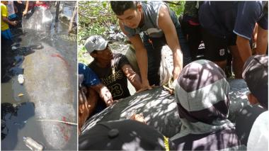 Pescadores serían responsables de muerte de manatí liberada en el mar