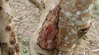 Aseguran que la virgen del Carmen se apareció en una comunidad indígena en Sampués