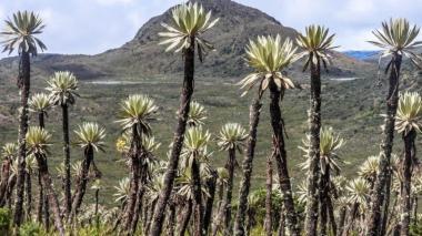 2.000 árboles sembrará el Fondo Porvenir en dos Parques Naturales de Colombia
