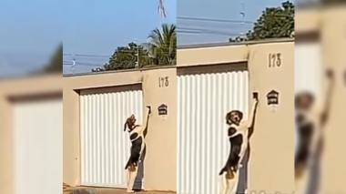 """¡Misterio resuelto! Perro era el """"falso fantasma"""" que tocaba el timbre en su casa en Brasil"""