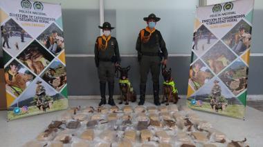 Incautan 55.500 gramos de marihuana gracias al canino África