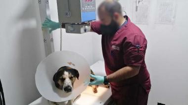 Fiscalía imputó cargos a dos personas por maltrato animal en Neiva y Zipaquirá