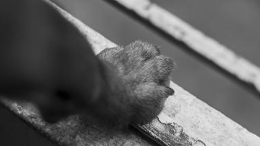 Hombre mató a machete a cachorros en Valledupar